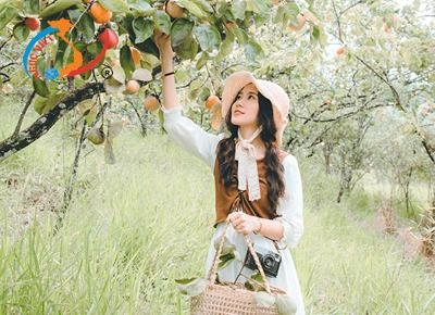 Check-in vườn hồng trĩu quả tuyệt đẹp trong chuyến du lịch Đà Lạt